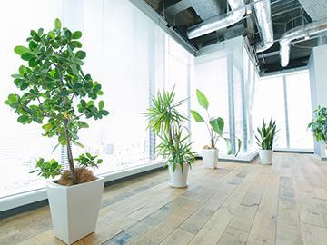 急拡大のため渋谷を展望できる広いオフィスに年明けに移転します