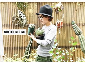 編集部のディレクターと 自宅での植物の様子です