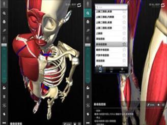 3D人体解剖アプリteamLabBody