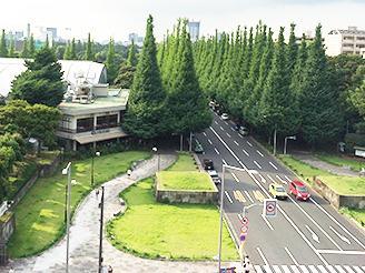 窓からの景色は緑いっぱい! この景色を楽しみながらランチできます。