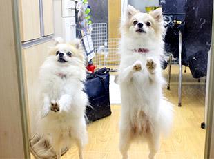 あなたと働けるのを、愛犬たちも首を長くして待っています☆