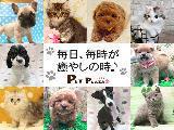多種多様な子犬・子猫があなたをお待ちしています♪
